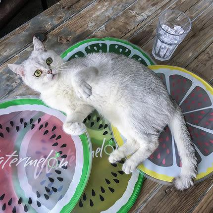 寵物冰墊狗窩夏天狗墊子泰迪夏季降溫床墊貓咪涼墊涼席墊狗狗用品WY 全館免運