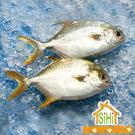 美食饗宴-黃金鯧魚【喜愛屋】