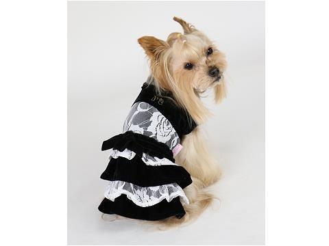【PET PARADISE 寵物精品】Pretty Boutique 晚宴風蕾絲刷絨洋裝 (3S/DSS) 寵物用品 寵物衣服《SALE》