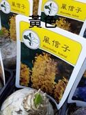 花花世界_季節花卉--風信子(黃色)--**球根植物**/3吋盆/高5-10CM/TC