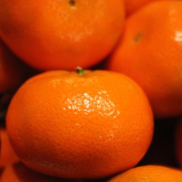 茂谷柑鮮果禮盒(一盒免運)(1/9開始出貨,每周三出貨一次)