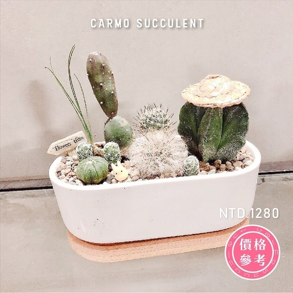 CARMO多肉植物客製組盆服務賣場【CM0001】