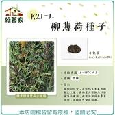 【綠藝家】K21-1.柳薄荷種子0.55克(約500顆)(神香草.海壽花)