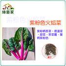 【綠藝家】A80.紫粉色火焰菜種子100顆