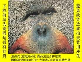 二手書博民逛書店DK罕見Eyewitness Mammal DK哺乳動物百科Y1