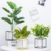 北歐仿真熱帶植物盆景假綠植小盆栽擺件 桌面擺設客廳室內裝飾ins 聖誕節全館免運