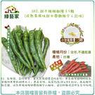 【綠藝家】G90.甜不辣辣椒種子5顆 (成熟果風味甜中帶微辣令人回味)