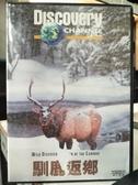 挖寶二手片-Z63-005-正版VCD-其他【馴鹿返鄉】-Discovery自然類(直購價)