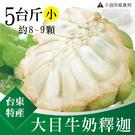 台東特產 精選 大目牛奶釋迦 5台斤/盒(小8-9顆)