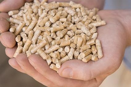 【天然松木貓砂】(20公斤/包)-大顆粒(顆粒直徑約7-9mm,顆粒較短)