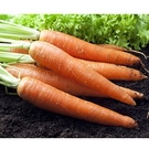 【南紡購物中心】鮮採家 鮮採紅蘿蔔3台斤1箱