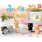 全套6款【日本正版】可愛貓咪 公仔夾 扭蛋 轉蛋 文件夾 BANDAI 萬代 - 418771