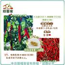 【綠藝家】大包裝G02-1.辣椒種子0....
