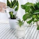 長嘴多肉植物澆花灑水器 澆花器 花灑 灑...