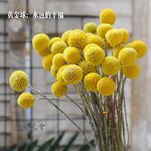 北歐家居軟裝天然植物干果干花干燥花永生花 烘干花配花 黃金球乾燥花·樂享生活館liv