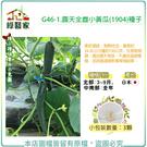 【綠藝家】G46-1.露天全雌小黃瓜(1...