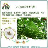 【綠藝家】G13.花匏瓜種子10顆