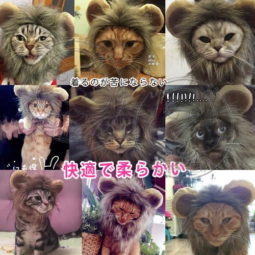 【培菓平價寵物網】dyy》賣萌寵物獅子頭套含耳朵S號