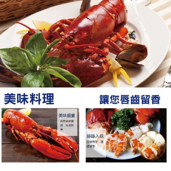 【海肉管家】加拿大頂級波士頓螯龍蝦x1隻(每隻400g-500g)