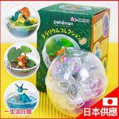 《日貨》Re-Ment 神奇寶貝 寶可夢 寶貝生態球 水晶球 造景球 盒玩 兒童 玩具  生日聖誕禮物 D62103