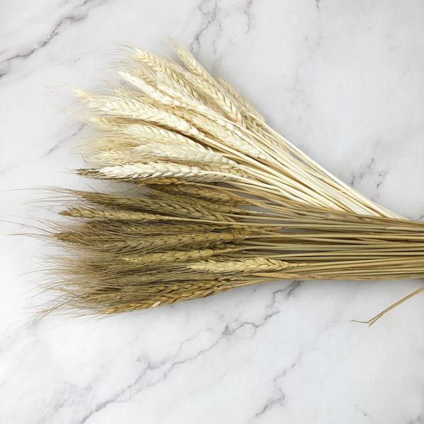 進口乾燥天然大麥進口花材線條感-乾燥花圈 乾燥花束 拍照道具 室內擺飾 乾燥花材-38元/10支