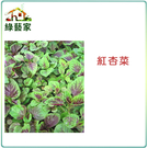 【綠藝家】A12.紅杏菜種子15000顆...