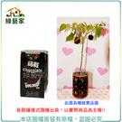 【綠藝家004-E00-1】iPlant易開罐花卉-巧克力椒2入/組(2入優惠價-單罐88元)