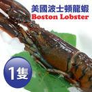 【屏聚美食】加拿大直送-頂級波士頓龍蝦X...