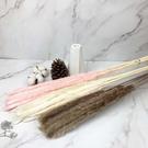 進口乾燥天然蘆葦-乾燥花圈 乾燥花束 拍照道具 手作素材 室內擺飾 乾燥花材 文菁風-28元/枝