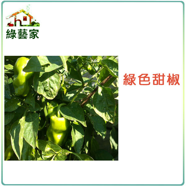 【綠藝家】G01.綠色甜椒(銘星.荷蘭進口)種子6顆