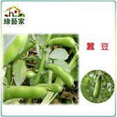 【綠藝家】大包裝E11.蠶豆種子550克(約370顆)