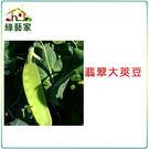 【綠藝家】E04.翡翠大莢豆(改良種)種...