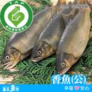 【台北魚市】產銷履歷驗證香魚 330g±10% (2尾/包)