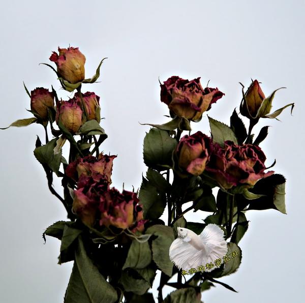 3枝一份 乾燥小玫瑰花花束 真花乾燥製成 ☆插花.天花板裝飾, 居家.店面.櫥窗擺飾.園藝☆