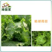 【綠藝家】B05.結球萵苣種子1500顆