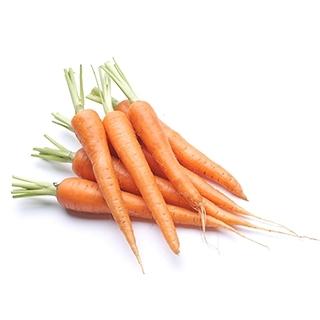 Visakha - 胡蘿蔔籽 Carrot seed 單方精油 (100ml)