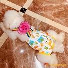母狗狗生理褲女泰迪例假月經期衛生大姨媽巾褲衩寵物安全避孕內褲【小獅子】