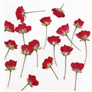 帶枝側壓玫瑰,月季,一份60支