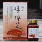 【高雄六龜鄉】和平牛樟芝(500mg/60粒裝)2盒特價!