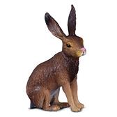 【永曄】collectA 柯雷塔A-英國高擬真動物模型-野生動物系列-野兔 88012