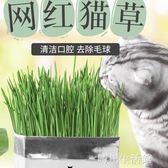 貓草貓薄荷種子種植套裝化毛土培去毛球貓咪化毛膏調理腸胃貓零食 晴川生活馆