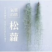 〔〕CARMO松蘿T. usneoides 空氣鳳梨(單入) 空鳳【KF088】