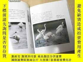 二手書博民逛書店黑麪舞者罕見-黑面琵鷺溼地生活影像9740 王微吉 攝影 攝影