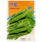 蔬菜種子-芥藍