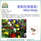 【綠藝家】H45.香堇花種子60顆