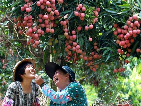 [台南]採果體驗-仙湖休閒農場〔6月荔枝、8月龍眼、10月椪柑、11-12月柳丁〕
