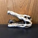 飾品【恐龍化石 恐龍頭M】 打造侏羅紀魚缸 造景裝飾 魚缸擺設 飾品 化石 魚事職人