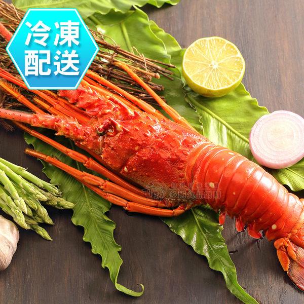 熟凍龍蝦500g±10% 燒烤 烤肉 冷凍配送[CO1709061]千御國際