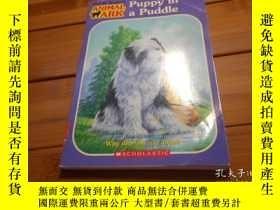 二手書博民逛書店PUPPY罕見IN A PUDDLE 小狗在水坑裏Y20470