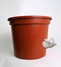 8吋 荷花睡蓮水生植物專用塑膠花盆(無孔...